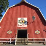 The animal barn at the Pumpkin Patch