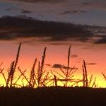 Sunsets at the Maze on Sauvie Island