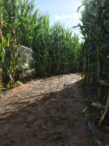 Portland Maize, light mud